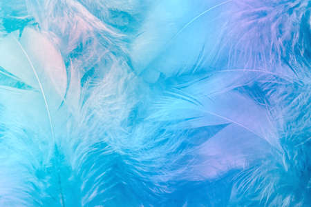 Abstract trend blue rainbow feather background. Closeup of colorful pastel neon fluffy feathers, fashion soft color of spring and summer. Soft selective focus.