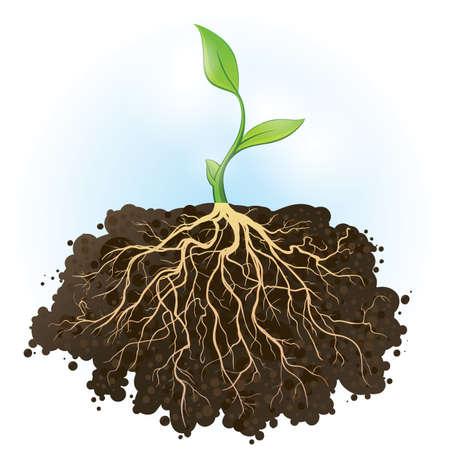 Vector illustratie van een verse, jonge plant met sterke wortels