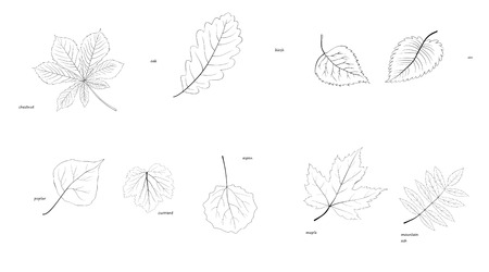 the silhouette leaves of the trees of various species Vector