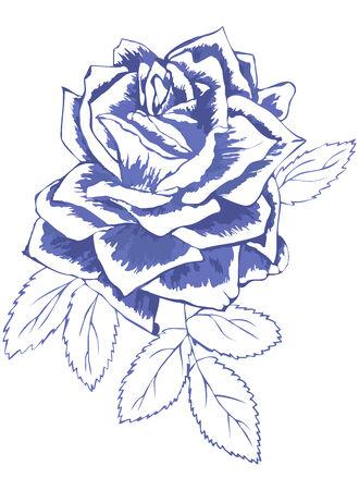 blauw getekende roos, schets van de bloem