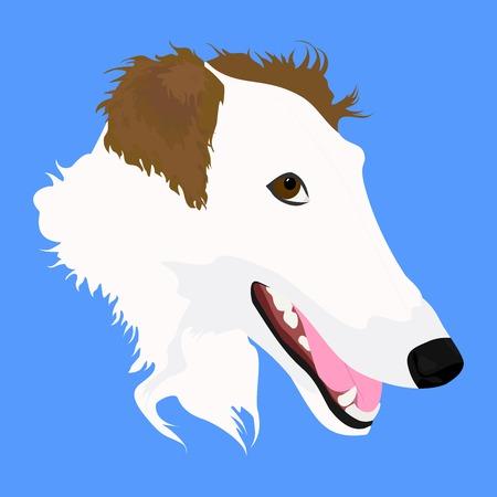 borzoi: head of white-brown Russian Borzoi in blue