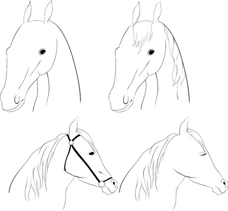 scetch: set of 4 scetch graphic horse head on white Illustration