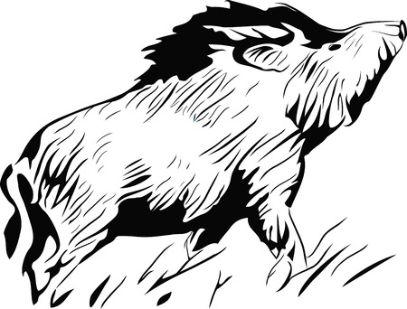 stylized silhouette wild pig, isolated wild boar