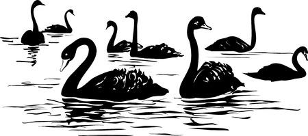 池や湖と黒い白鳥の群れ  イラスト・ベクター素材