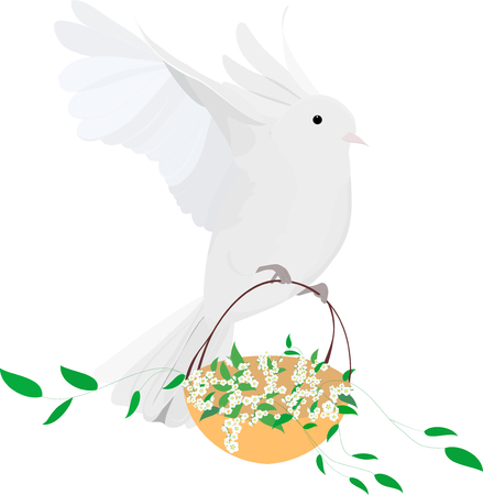 one isolated: one isolated Easter white dove on fly with basket of flowers