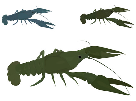 crawfish: isolated green crayfish, river green scavenger crawfish Illustration
