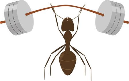 cartoon strong  ant raises very heavy barbell  向量圖像