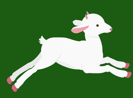 mountain goat: goat kid  with  small horns jumping on green background