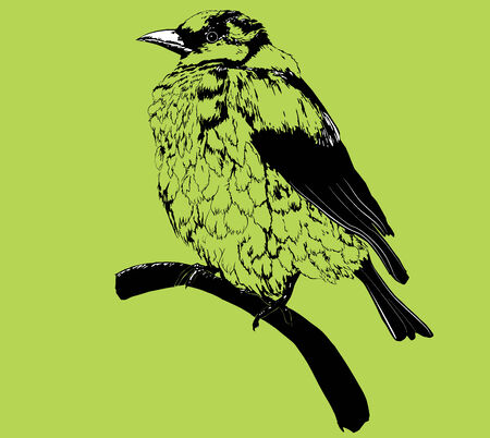 isolated stylized black sparrow, rough sketch of little bird