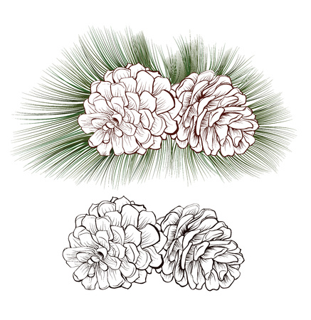 isolated christmas drawn pine cones with fir-needles