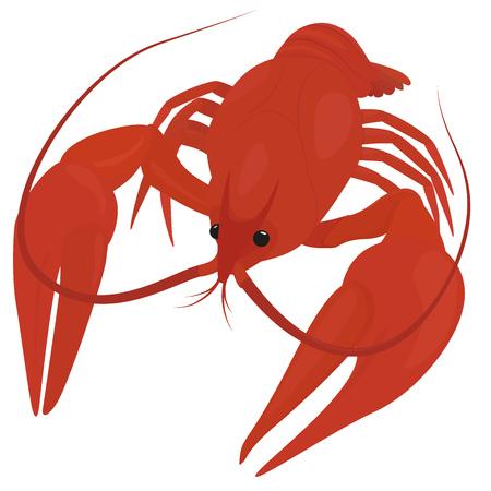 cangrejo caricatura: hervida cangrejo rojo, cangrejo de r�o aislado en blanco