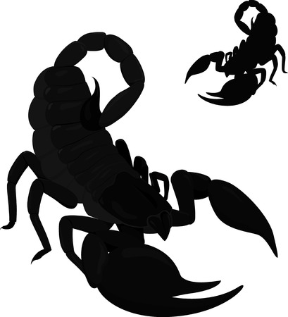 cartoon scorpion: black poisonous scorpion isolated on white with silhouette