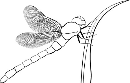 predatory insect: black stylized predatory  insect dragonfly isolated on white Illustration