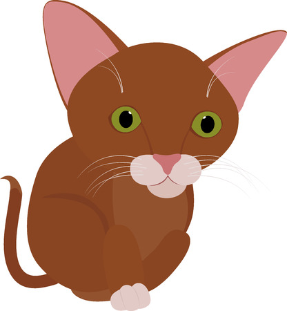 green eyes: Funny brown kitten with very  big green eyes isolated on white Illustration