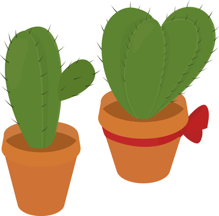 spiny: Cactus in pot, home green  flora, prickly plant, spiny