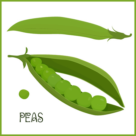 green peas: isolated pods of green peas, vegetable vector illustration