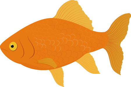 Carassius auratus gold fish . Fish isolated on a white background. Illustration