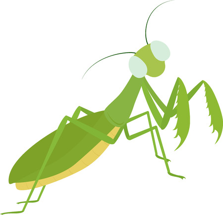 Green cartoon insect Mantis Isolated on white