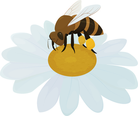 cartoon brown bee on white flower