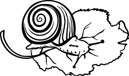 Hand drawn snail on white background. Snail sketch. Cute snail. Snail icon. Snail doodle. Cochlea sketch. Doodle cochlea. Cochlea icon. Vector illustration