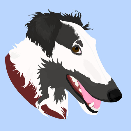 Vector Illustrated portrait of Borzoi dog. Cute face of Russian wolfhound domestic dog on blue background. Illustration