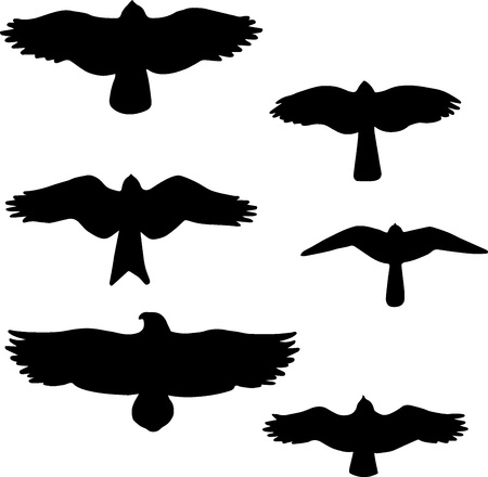 Set of black isolated silhouettes of birds.