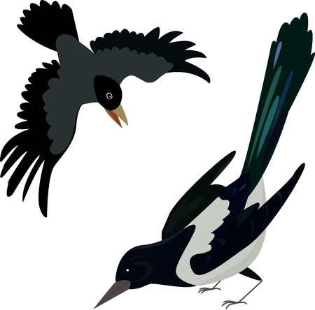 Flying crow. Circuit birds. Raven. Rook. Magpie. Illustration