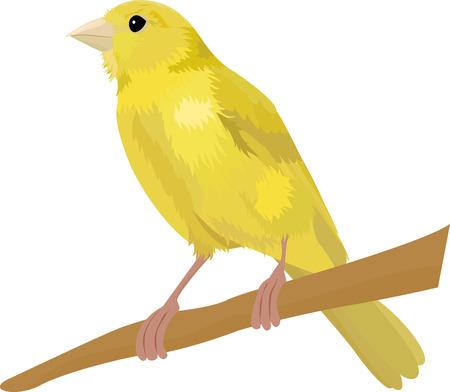 Kanarie gele vogel vectorillustratie geïsoleerd op een witte achtergrond Vector Illustratie