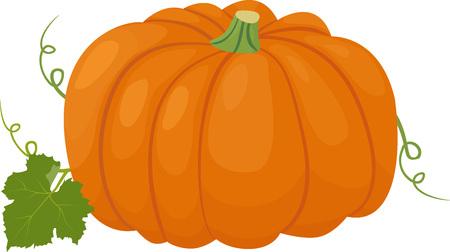 Orange pumpkin vector illustration. Autumn vegetable