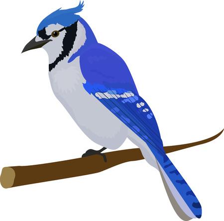 Blue cartoon jay bird. Isolated on white background.