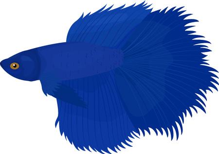 Siamese fish, illustration siamese fish isolated Illustration