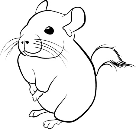 Cute chinchilla line art. Black line illustration Illustration