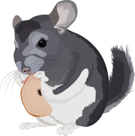 Illustration of cartoon grey chinchilla with apple