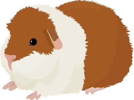 Vector illustration of cartoon guinea pig. Stock Vector - 96710191