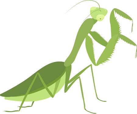 Cartoon green praying mantis isolated on white