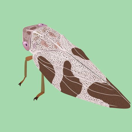 cartoon cicada isolated on light coloured green background Illustration