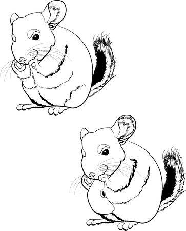 Illustration of line art chinchilla Illustration
