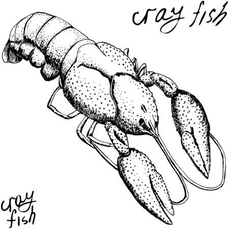 lobster or crayfish, vintage hand drawn illustration, monochrome black sketch