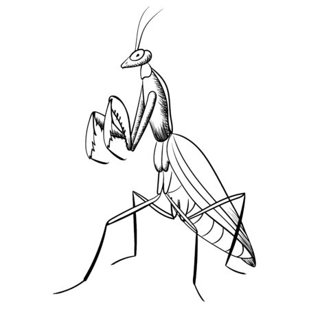 mantis vector black line illustration of insect