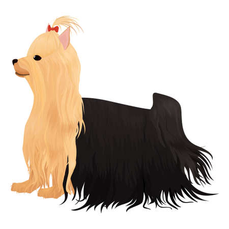 yorkshire terrier dog isolated on white. cartoon long haired yorkie dog with red bow vector illustration