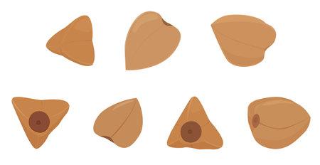 Buckwheat groats grain set isolated on white background. Cartoon vector illustration