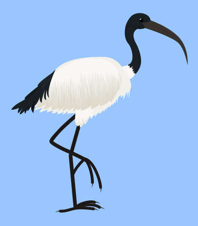 Cartoon vector icon of ibis isolated on blue. Sacred bird of Egypt, with long legs and narrow beak. Tropical African fauna 向量圖像