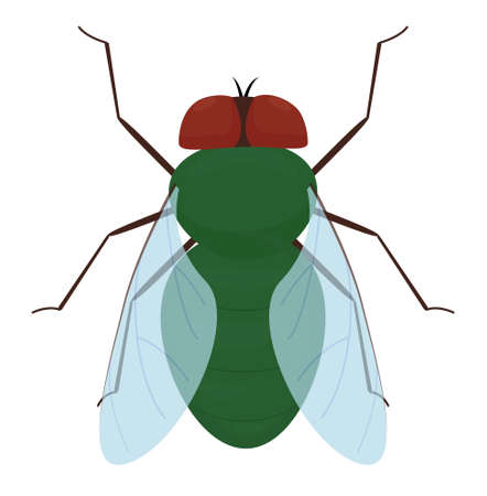 Cartoon green fly isolated on white background. Vector insect illustration
