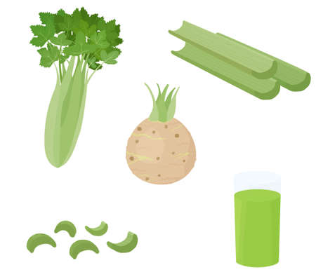 Green celery vegetable stalks and root isolated on white background. Healthy dietic colorful food ingredient vector cartoon illustration.