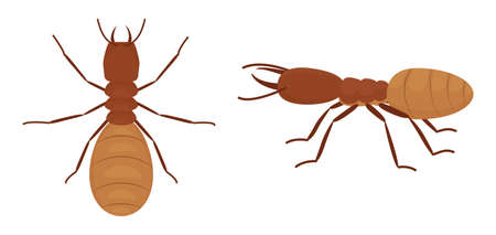 Cartoon termites isolated on white background, insect wood pest. Vector wild animal illustration.