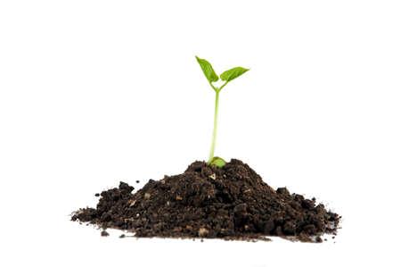 start fresh: Growing green plant  Pile of soil   on white background