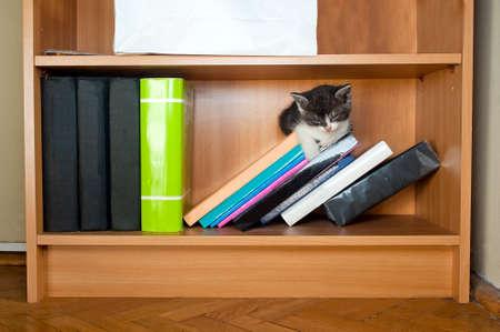 Kitten Sleeping On Books In Bookshelf Stock Photo