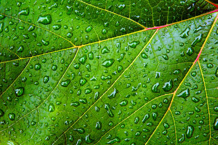 Green leaf with water drops and reflections photo