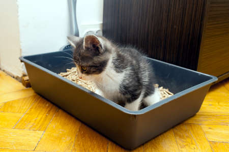 horizontal photo of dispose kitty in litter box