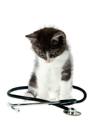 Vet visit concept. Little kitty sitting, Stethoscope is around cat. Isolated object at white background